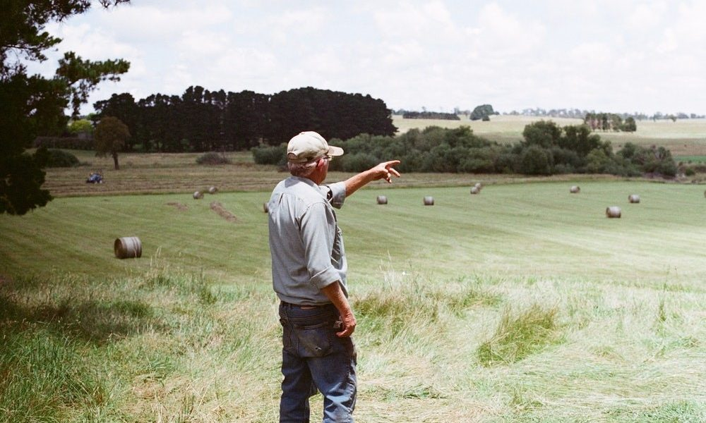 Farmer Overlooking His Pastures