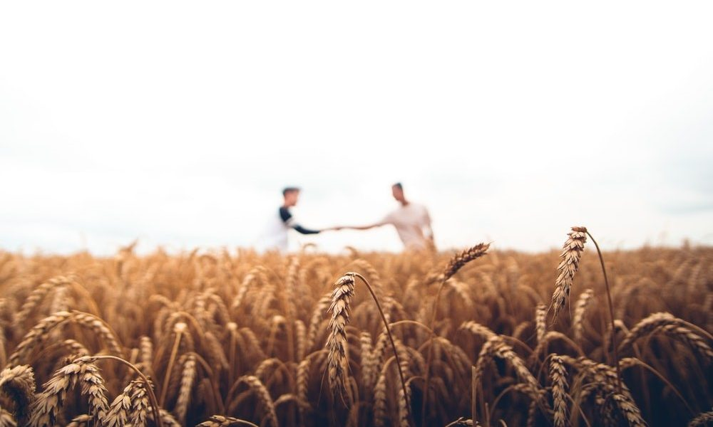 Two Farmers Shaking Hands in a Field of Wheat